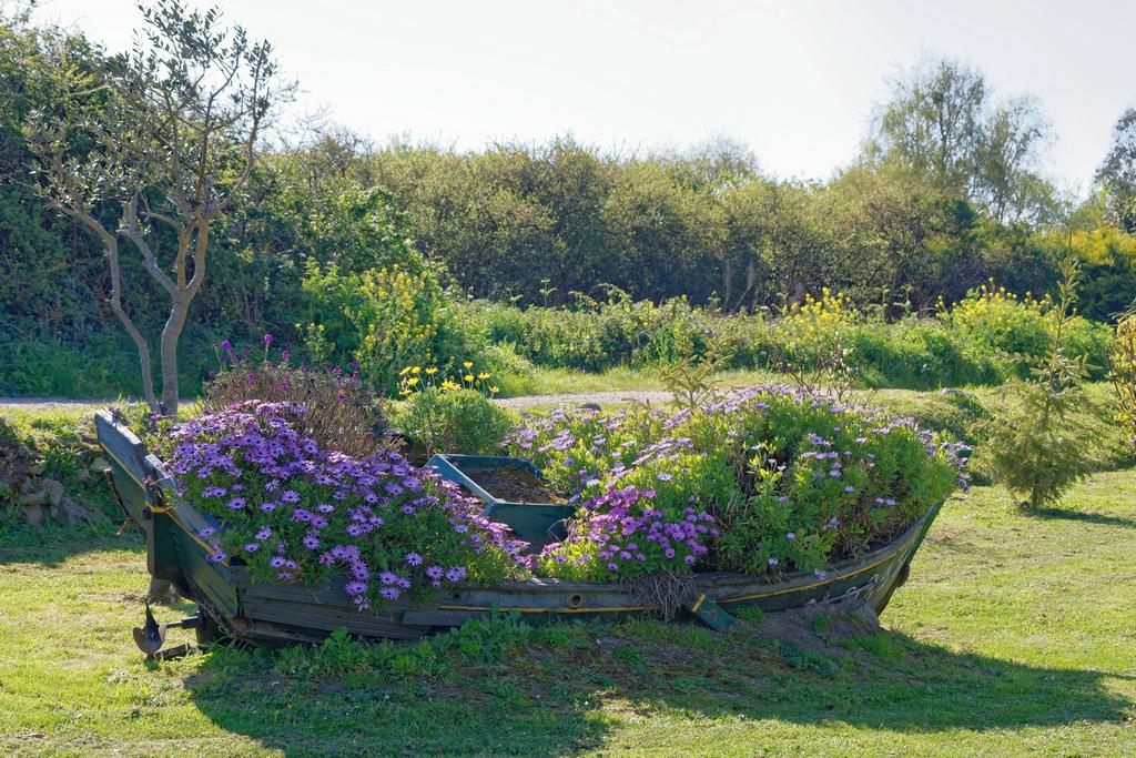 Immigration de fleurs vers nos jardins de France ! Dsc_0836