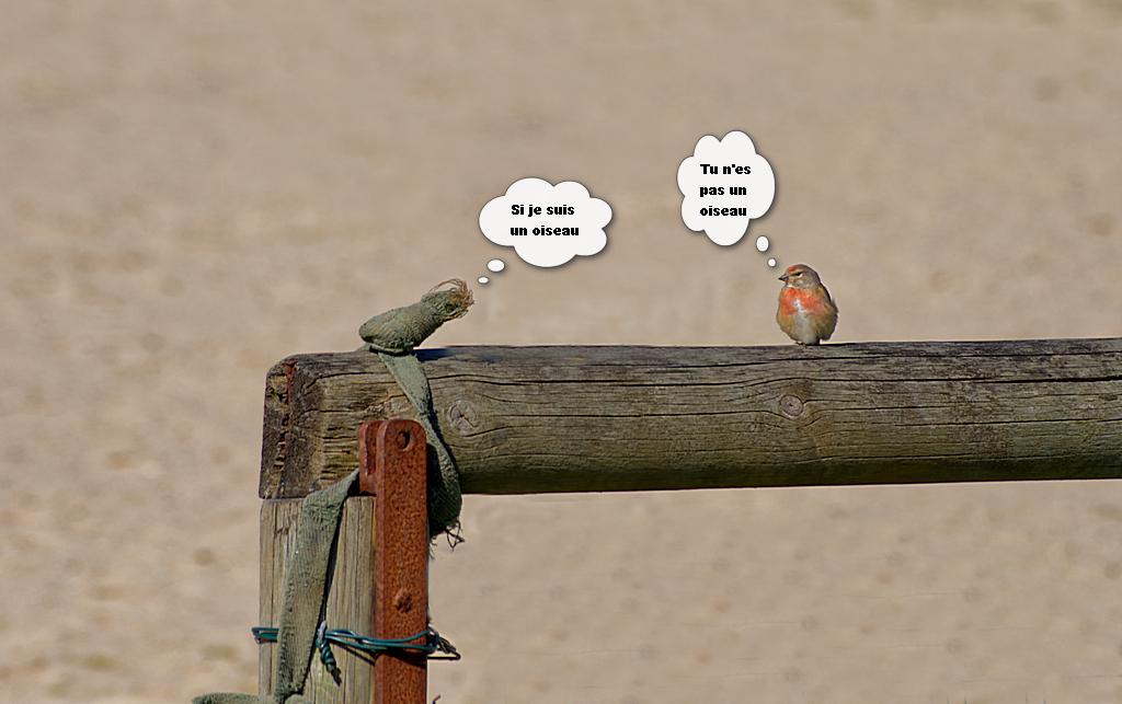 Drôle d'oiseau ! Dsc_0837