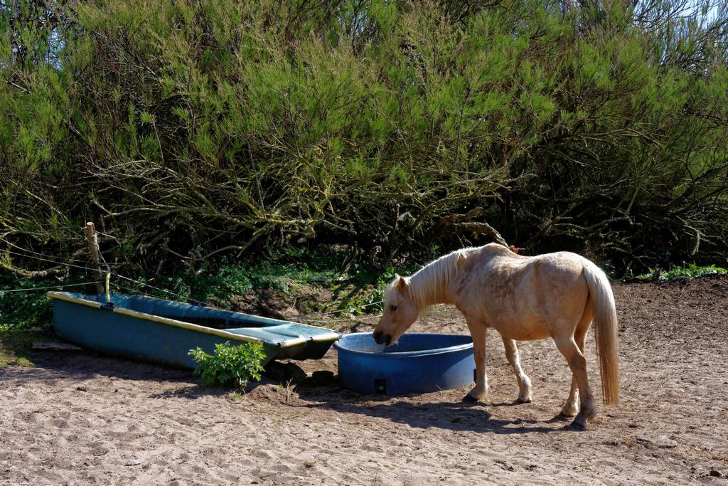 Quand le cheval a soif, il ne dédaigne pas l'eau trouble. Dsc_0916