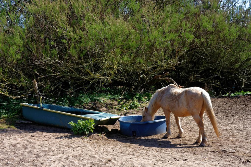 Quand le cheval a soif, il ne dédaigne pas l'eau trouble. Dsc_0917