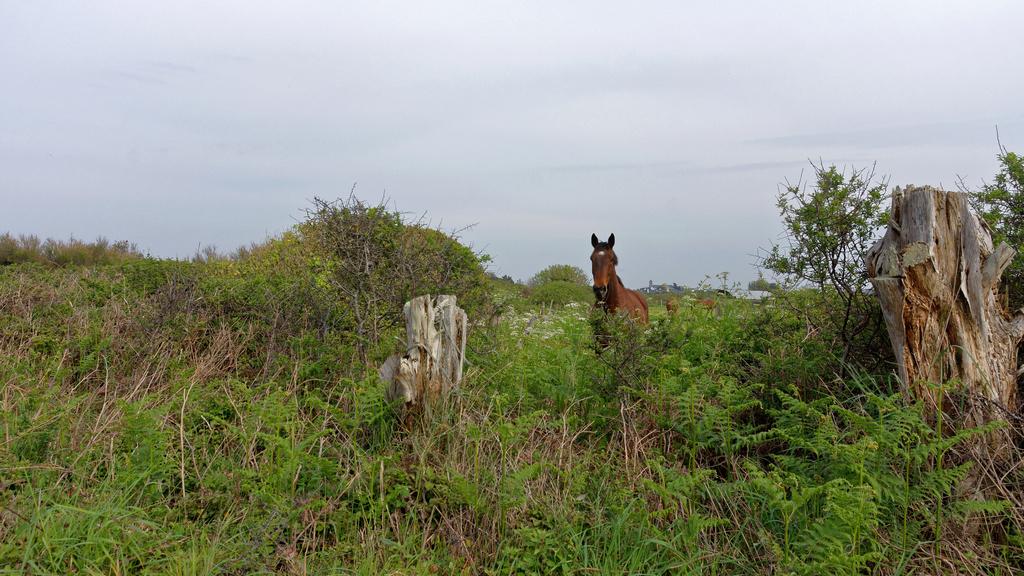Le cheval et le photographe ! Dsc_0948