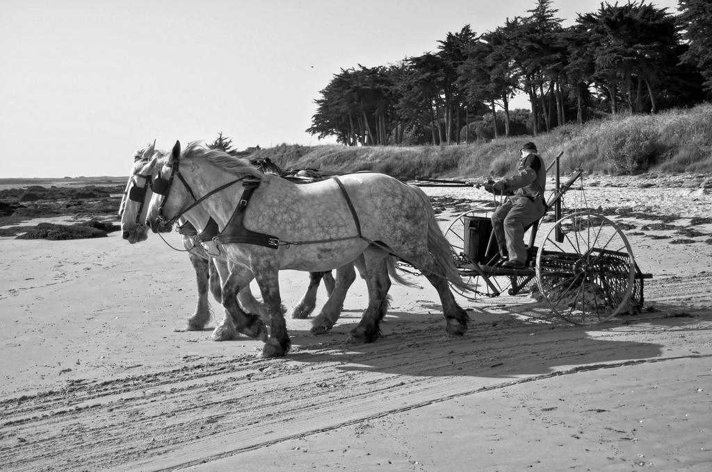 Nettoyage plage écologique ! Dsc_1010