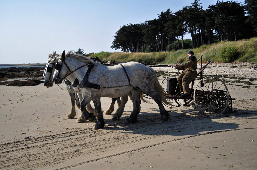 Nettoyage plage écologique ! Dsc_1011