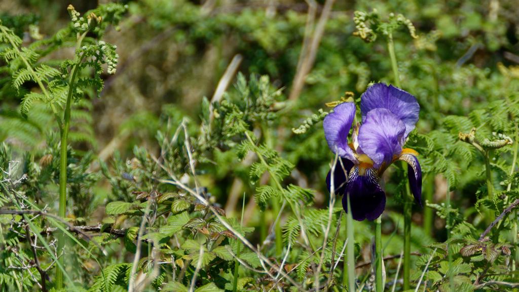 Iris by jpc ! Dsc_1030