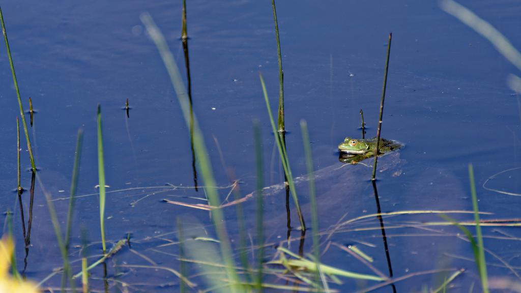 Première grenouille et elle a bien voulu posée ! Dsc_1038