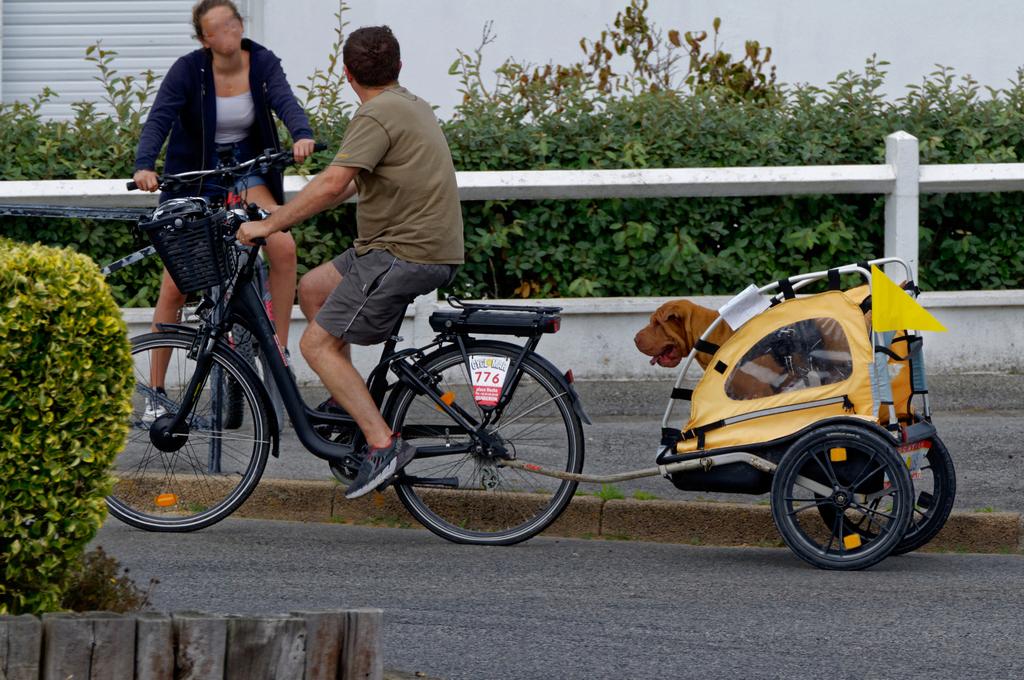 Promener son chien chacun sa méthode !!! Dsc_1717