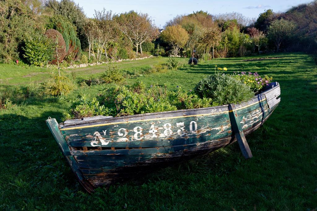 Bac non barque à fleurs d'automne ! Dsc_1765