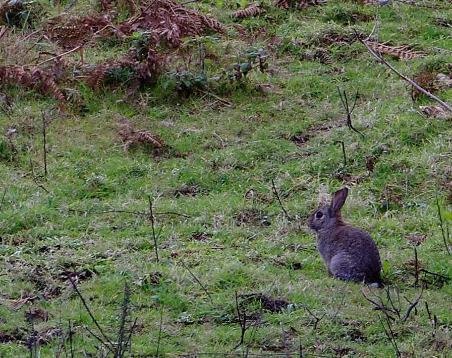 """J'ai posé un lapin """"de loin"""" ! Dsc_1849"""