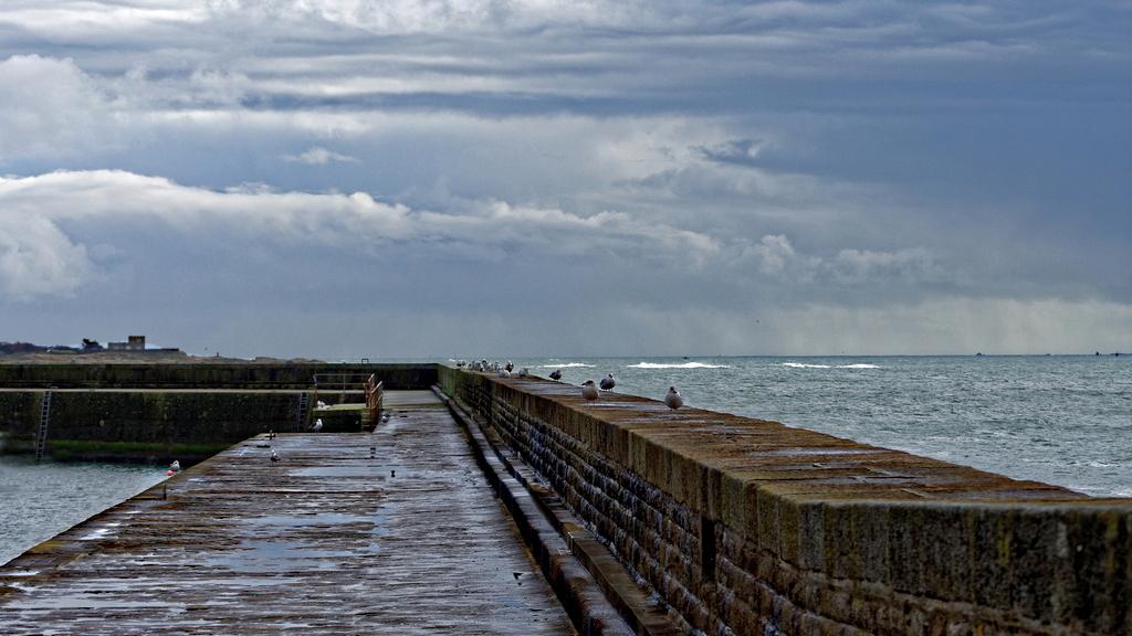 Par mauvais temps les goélands restent à quai Dsc_2222