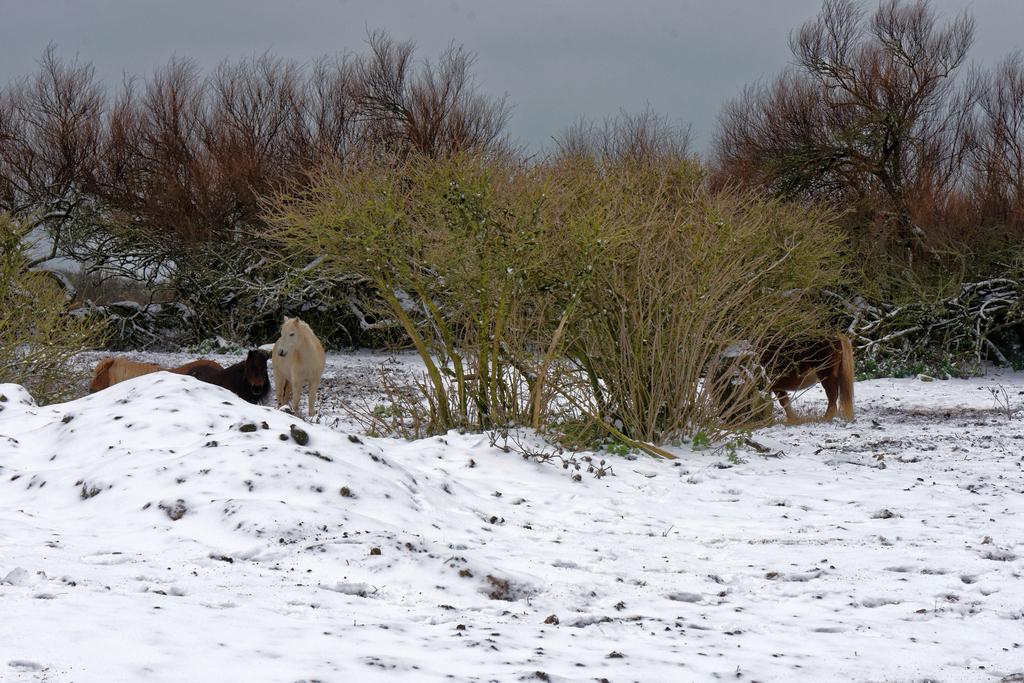 """Chevaux de """"neige"""" ! Dsc_2414"""
