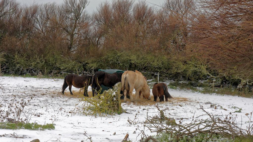 """Chevaux de """"neige"""" ! Dsc_2515"""