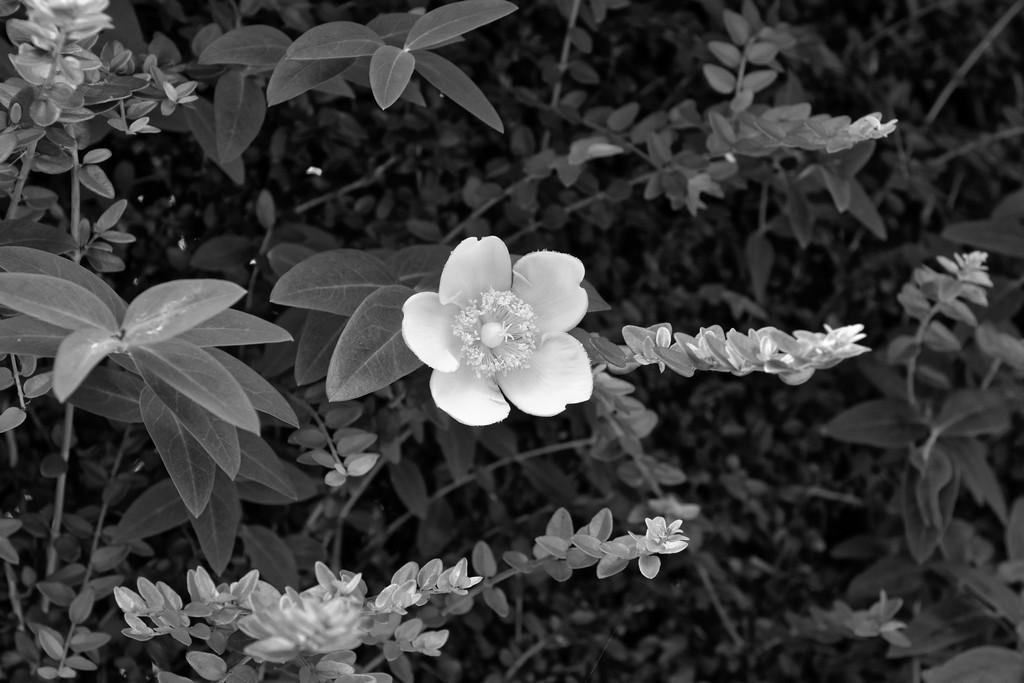 fleur monochrome! Dsc_3520