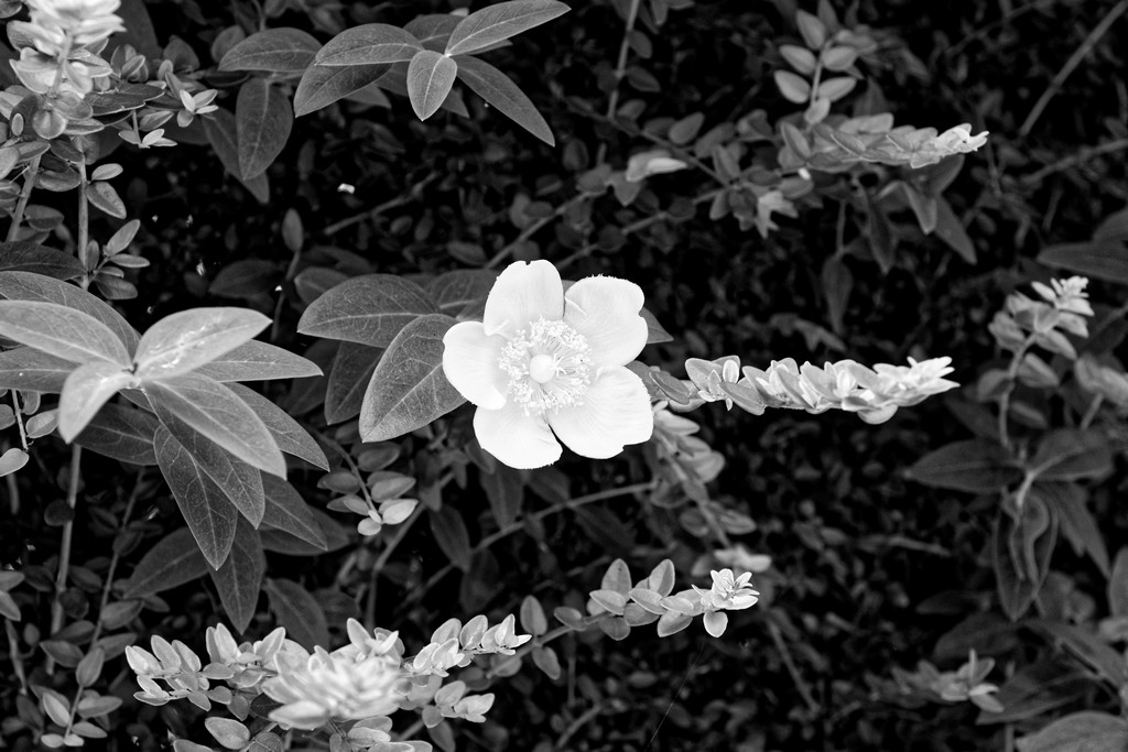 fleur monochrome! Dsc_3521