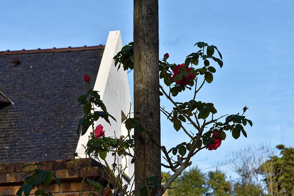 """On a découvert le """"pot aux roses"""" Dsc_4318"""