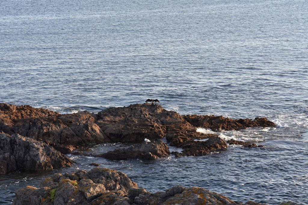 Côte Sauvage coté Finistère Sud ! Dsc_4326