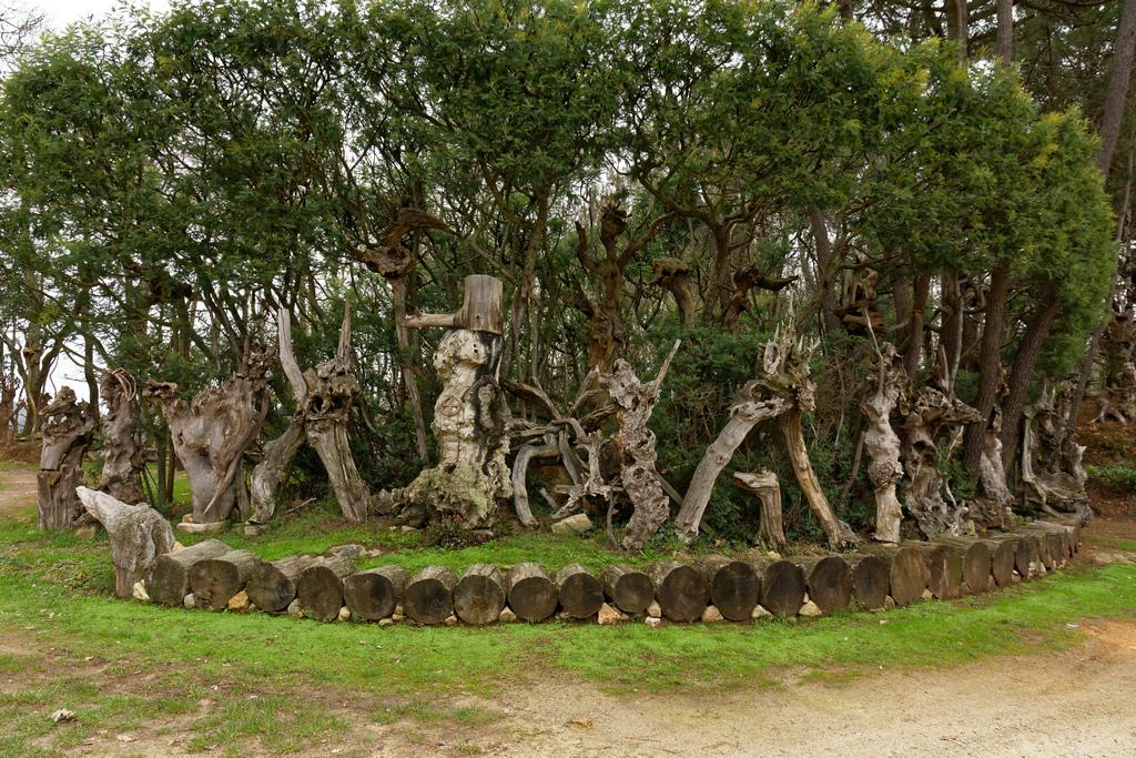 Bois fantastiques du Mont Salut  Dsc_5120