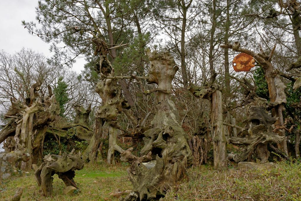 Bois fantastiques du Mont Salut  Dsc_5121