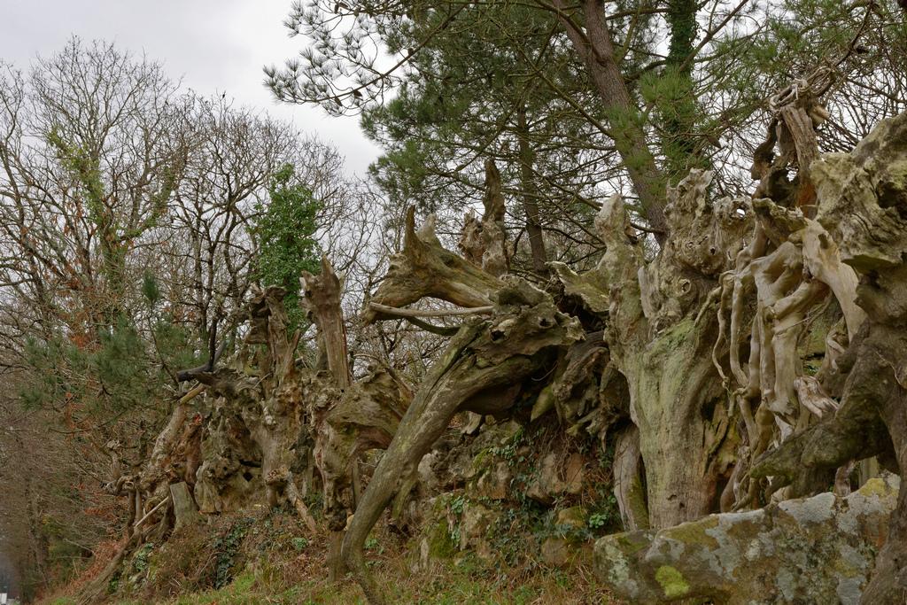 Bois fantastiques du Mont Salut  Dsc_5123