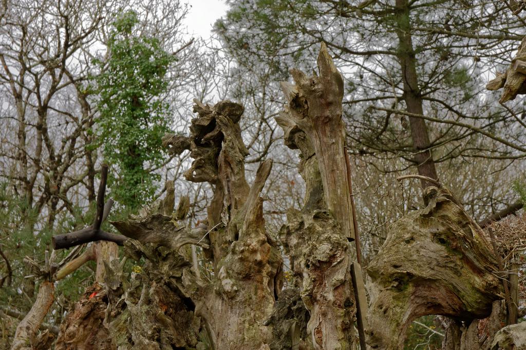 Bois fantastiques du Mont Salut  Dsc_5124