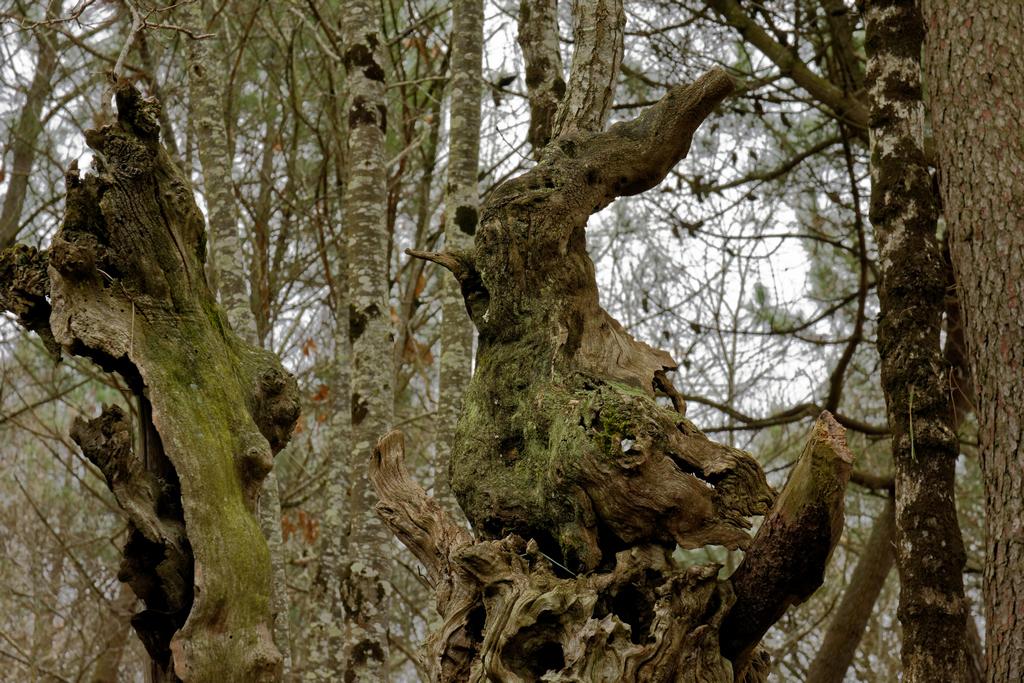 Bois fantastiques du Mont Salut  Dsc_5126