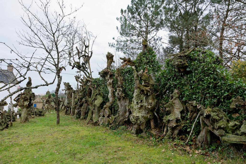 Bois fantastiques du Mont Salut  Dsc_5127
