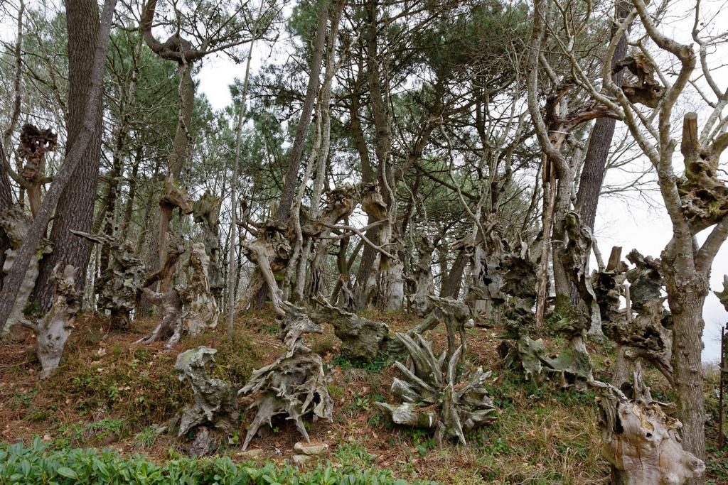 Bois fantastiques du Mont Salut  Dsc_5128