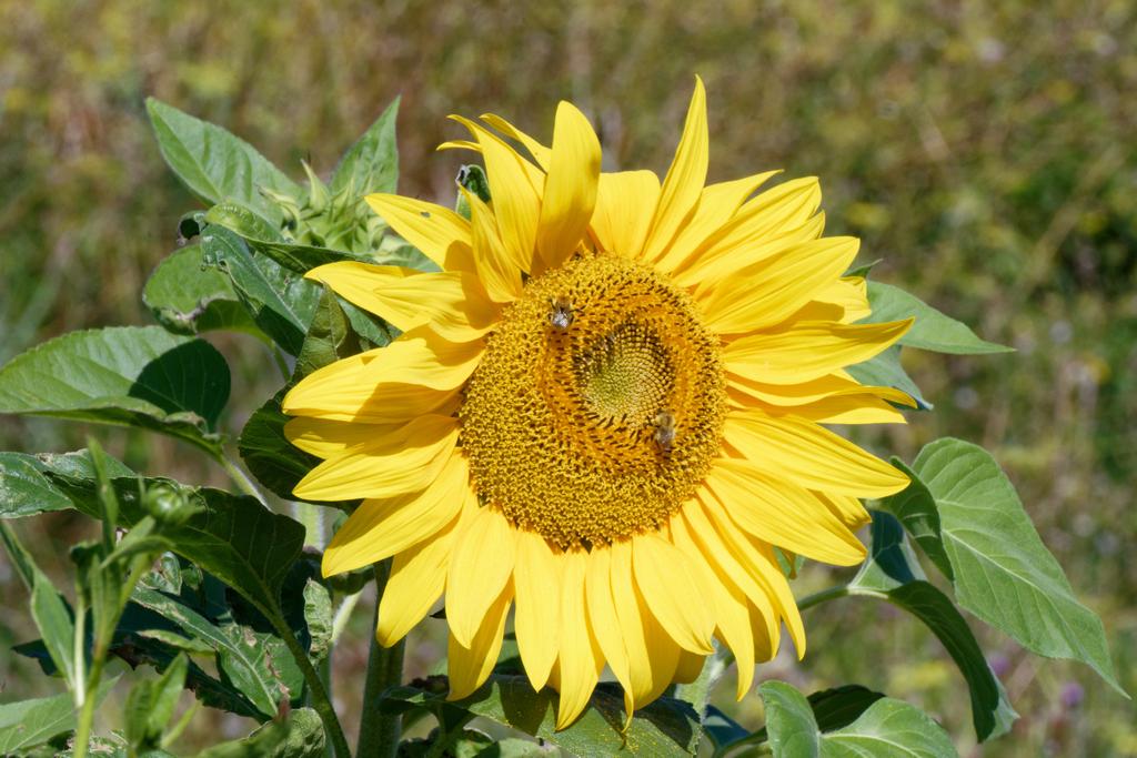 Pein soleil Dsc_6721
