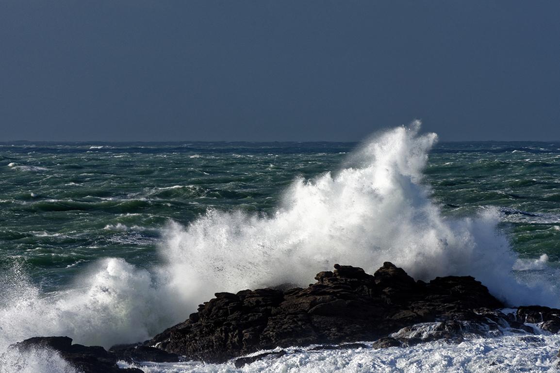 Nettoyage de fin d'automne en mer ! Dsc_7419
