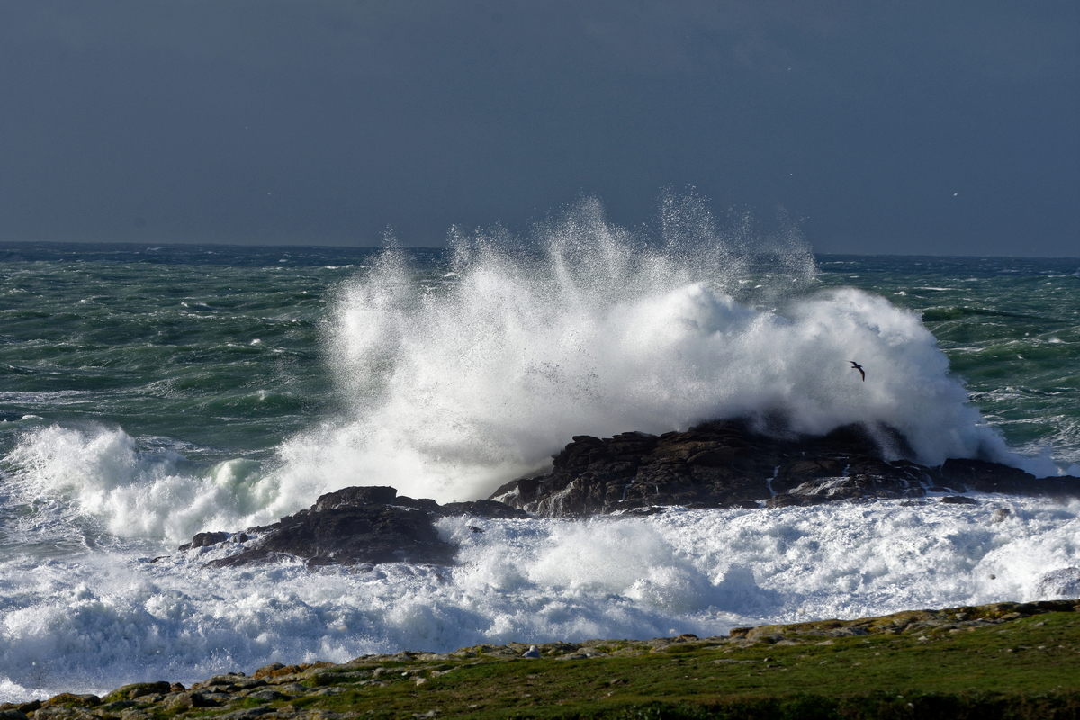 Nettoyage de fin d'automne en mer ! Dsc_7420