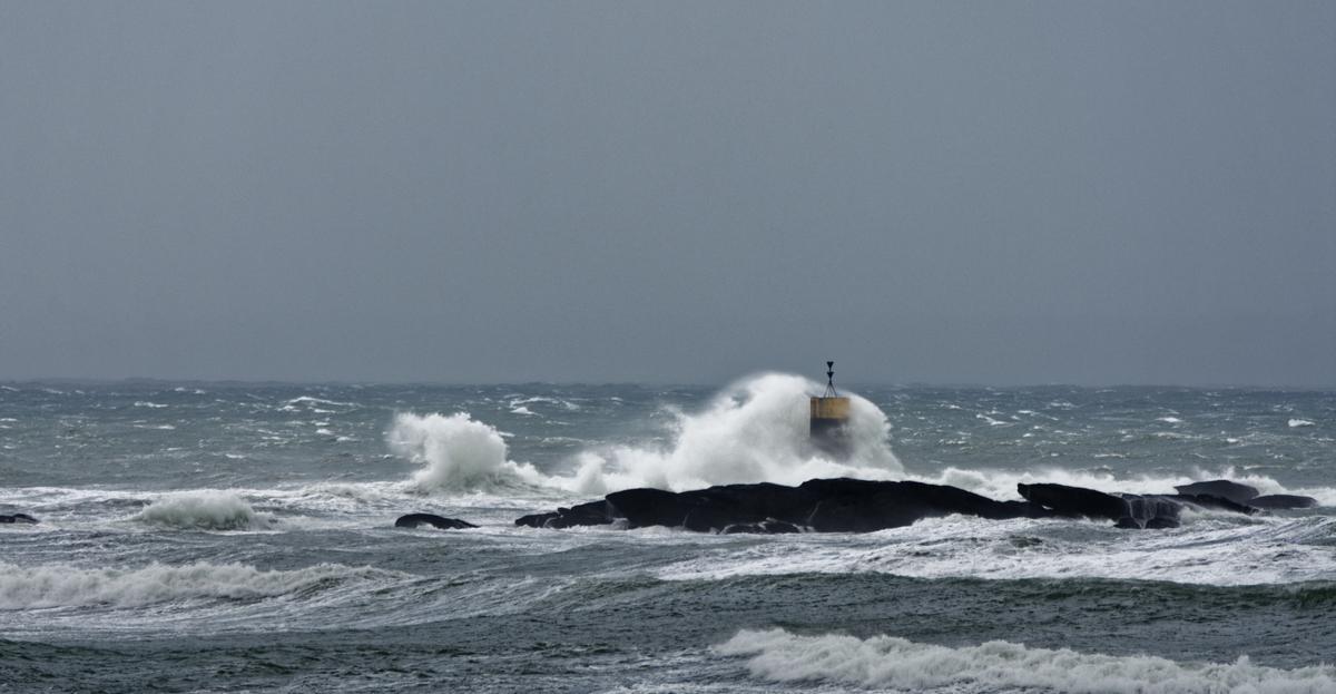 Nettoyage de fin d'automne en mer  2 ! Dsc_7422