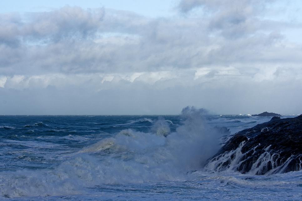 Nettoyage de fin d'automne en mer 4 ! Dsc_7425
