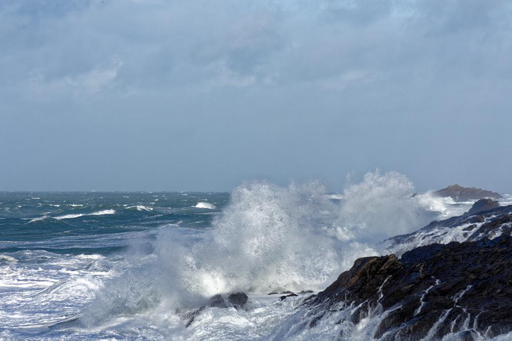 Nettoyage de fin d'automne en mer 4 ! Dsc_7426