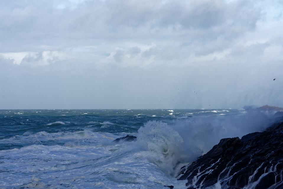 Nettoyage de fin d'automne en mer 4 ! Dsc_7427