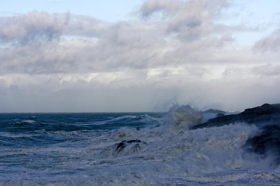 Nettoyage de fin d'automne en mer 4 ! Dsc_7428