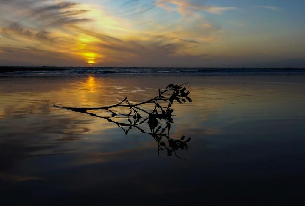 coucher de soleil et reflet d ' une branche de lilas de Mer Lilas_12