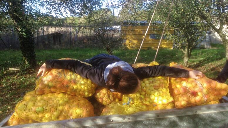 Tomber dans les pommes  Mms_im10