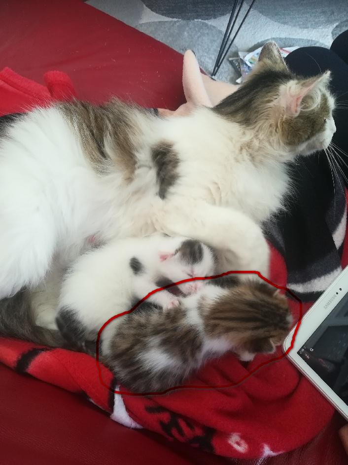 Notre futur jeune chat ! Thumbn21