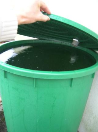 eau de pluie Dscn2913