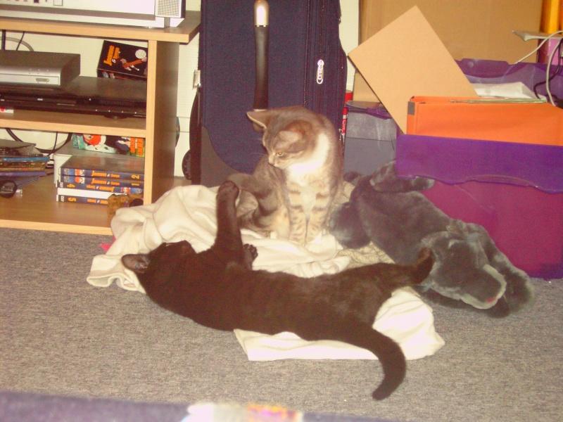 Keenah petite panthère noire 5 mois Pict0010