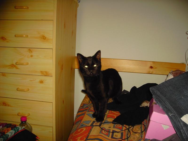 Keenah petite panthère noire 5 mois Pict0014