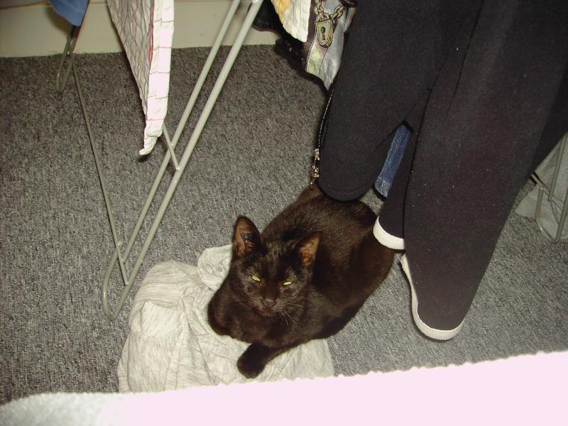 Keenah petite panthère noire 5 mois Pict0110