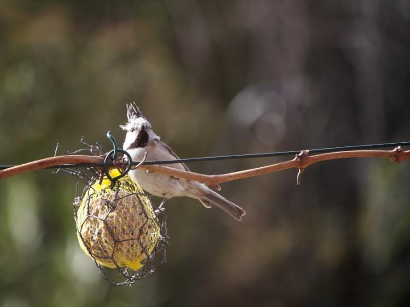 objectif pour shooter Roger et ses copains les oiseaux 2013_o10