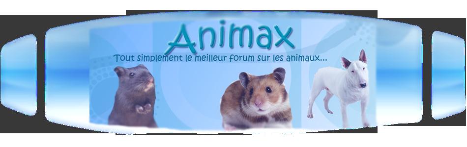 Animax, le forum des animaux
