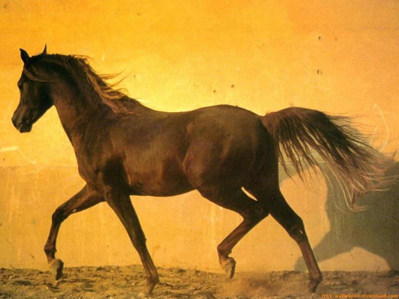 Horses 111