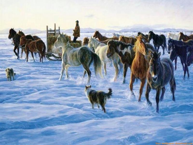 Horses 211