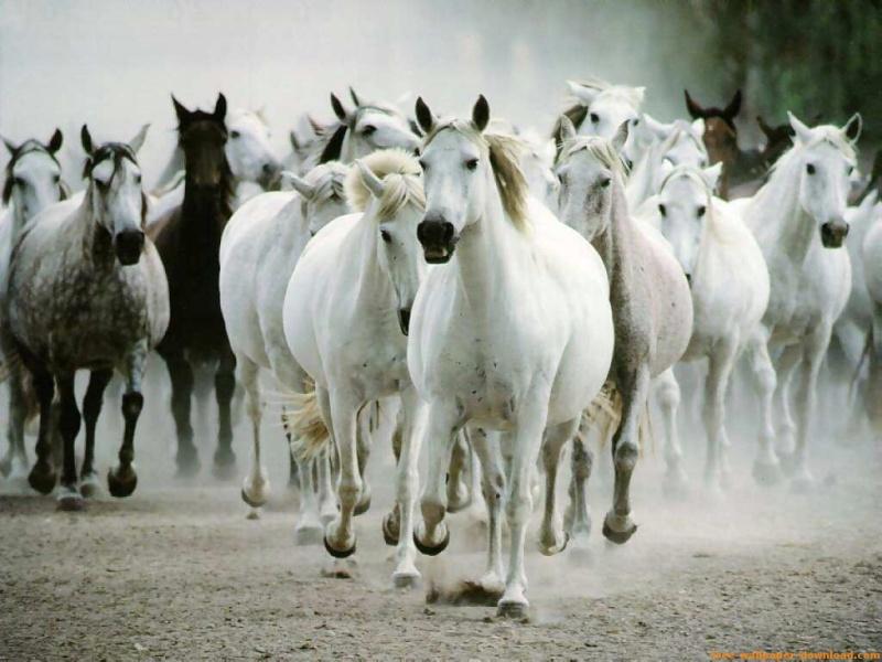 Horses Horses10