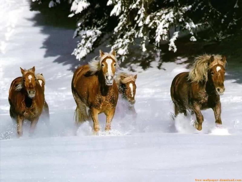 Horses Horses11
