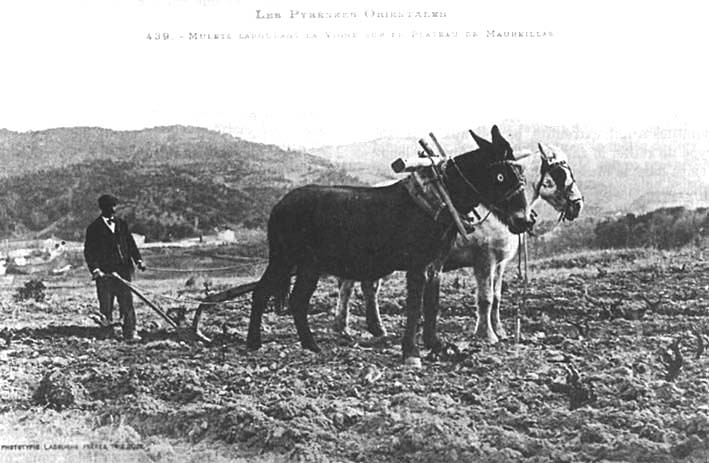 photos anciennes de Maureillas Labour10
