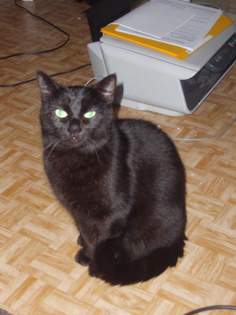 Mila, noire, 4 ans Pa142010