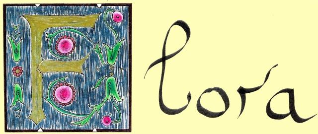 [calligraphie] la gallerie de lucosia Image-11